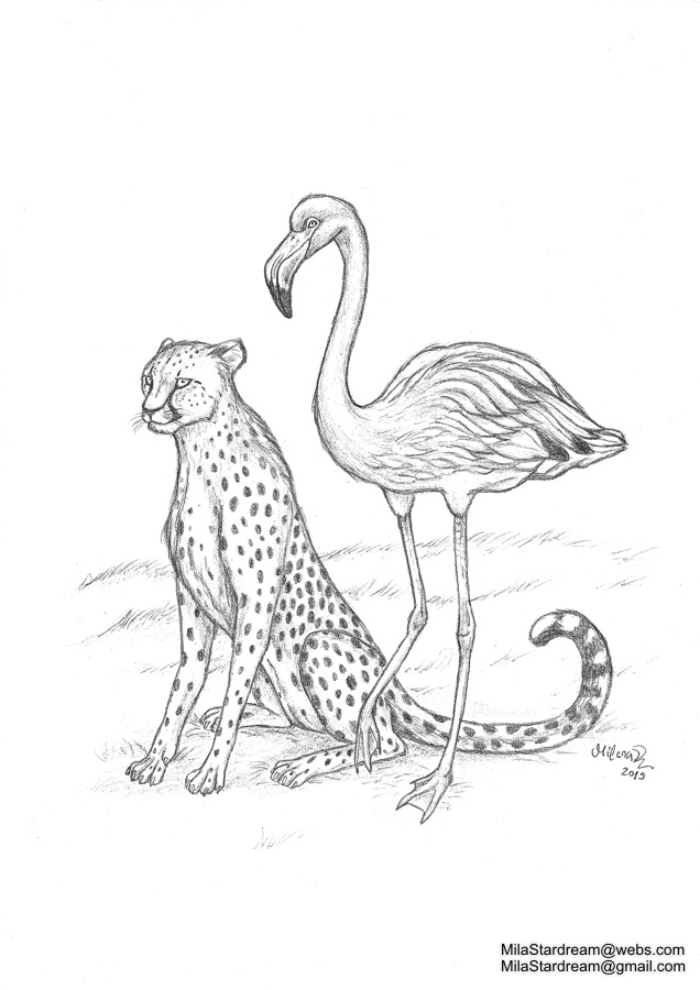 Cheetah and flamingo